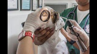 Homeopatía veterinaria, otra alternativa para tratar a las mascotas | Noticias Caracol