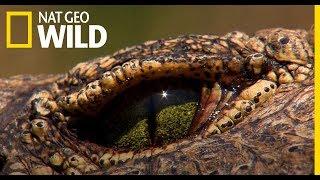 Nat Geo Wild - Idn nyron is