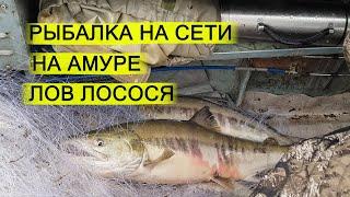 Рыбалка на сети на Амуре Лов кеты Осенняя рыбалка на реке