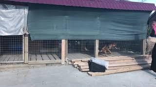 Дрессировка собак в Самаре у Вас на территории. Обучение охране.