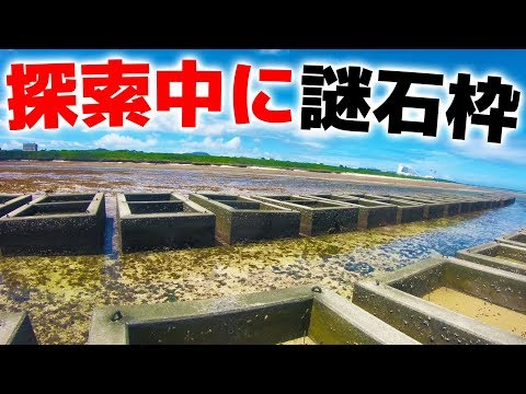 石垣島の海を探索して、魚をとって食う!【石垣/鳩間島遠征#番外編】