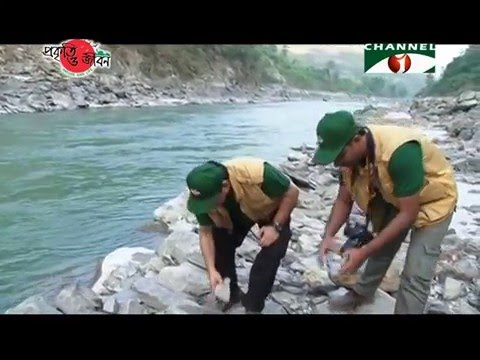 Nature and Life - Episode 206 (Hilly Rivers)