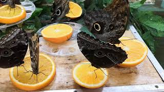 Лесена на выставке насекомых в краеведческом музее