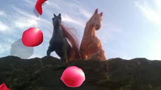 Фото всіх коней і не тільки