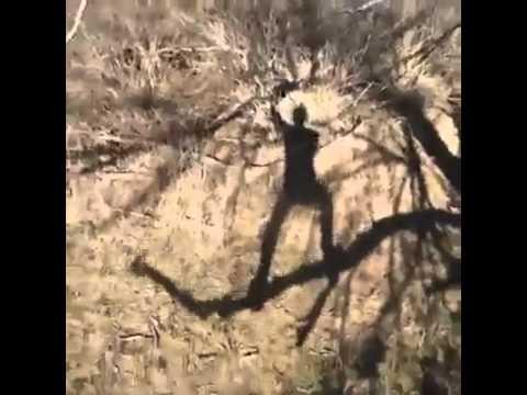 Affe tanzt auf dem Baum und singt