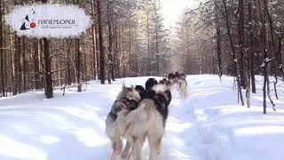 Упряжка 10 собак