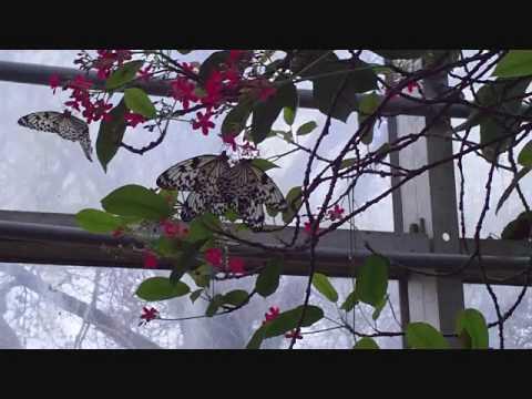 Butterflies at the Botanical Garden