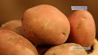 5 фактов о картошке