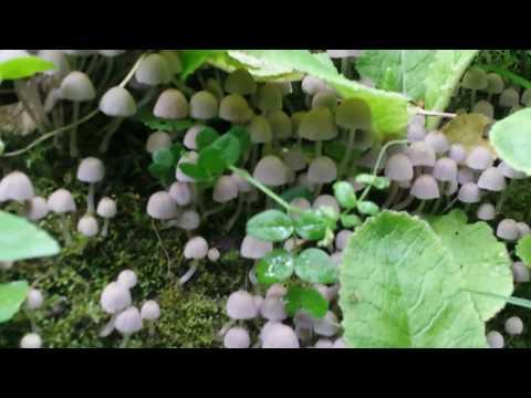Loads of Mushrooms