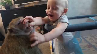 Любимое занятие (макака и малыш)