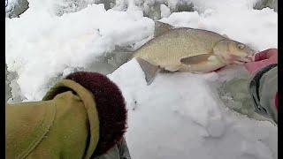 Ловля рыбы на безнасадочную мормышку ловля окуня леща и ерша