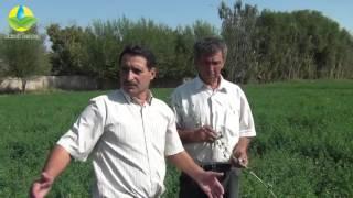видео Выращивание люцерны