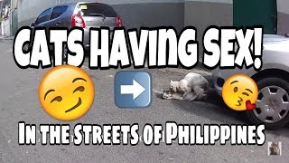 TRAVEL VLOGS: CATS HAVING SEX! Hong Kong Airport and Manila Philippines 2015-2016
