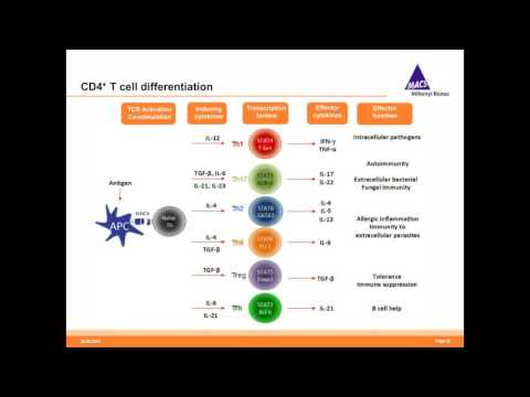 Anne Richter - Spotlights on T cells new developments for translational and basic T cell research
