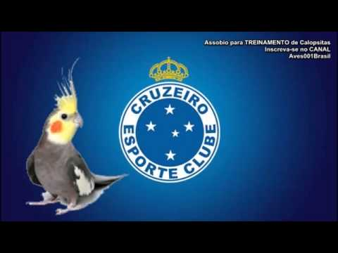 4d9b36ded Assobio para TREINAMENTO de Calopsitas Hino do Cruzeiro MG - YouTube