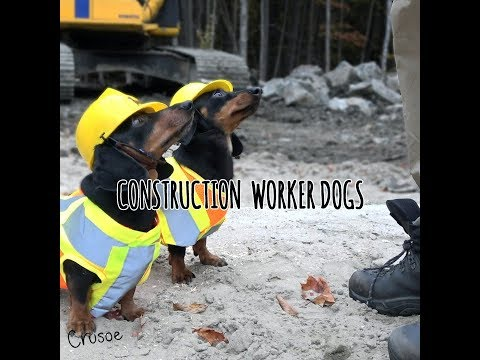 Construction Worker Wiener Dogs!