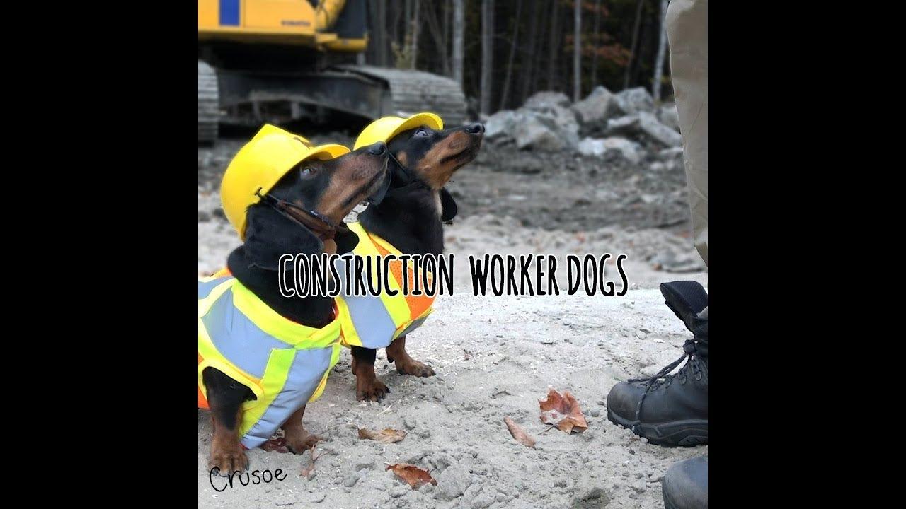 Construction Worker Wiener Dogs Youtube