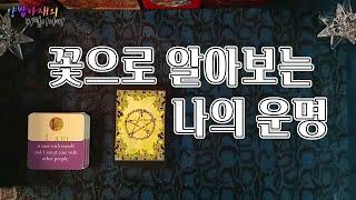 양밥아재의 타로이야기 : 꽃점으로 알아보는 나의 운명(타로카드,운세,애정운,금전운,취업운,사주,궁합,풍수)