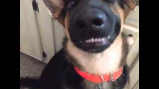 Top Vine Videos: The Smiling Dog!