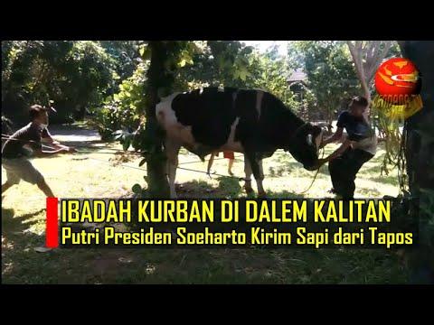 PUTRI PRESIDEN SOEHARTO KURBAN DI DALEM KALITAN