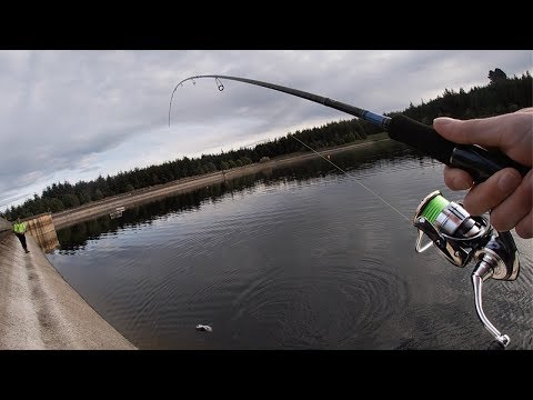 They Were On The BITE! FISHING For RAINBOW TROUT