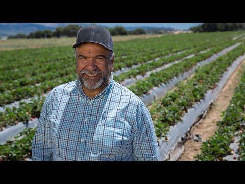 Meet California Strawberry Farmer, Jesus Alvarado