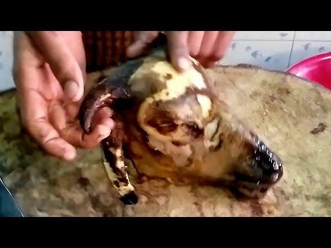 Goat Head Recipe   Fastest Goat Head Cutting   Lamb Head Recipe   Mutton Talakaya Recipe