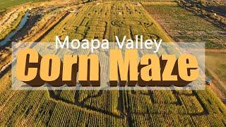 Moapa Valley Corn Maze!