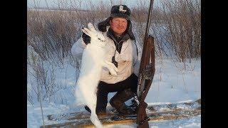 Охота на зайца . Сибирский беляк. ТОЗ-87