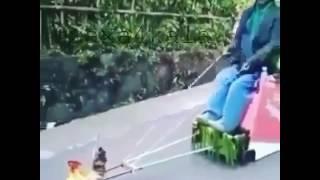 Петух с повозкой