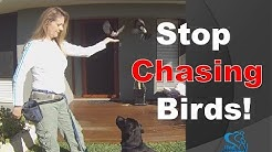 Training a Dog Not to Chase Birds (Dog Charming)