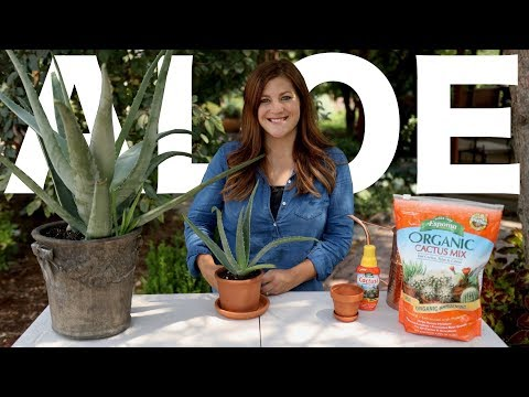 Aloe Vera Care Guide! 🌿🌵// Garden Answer