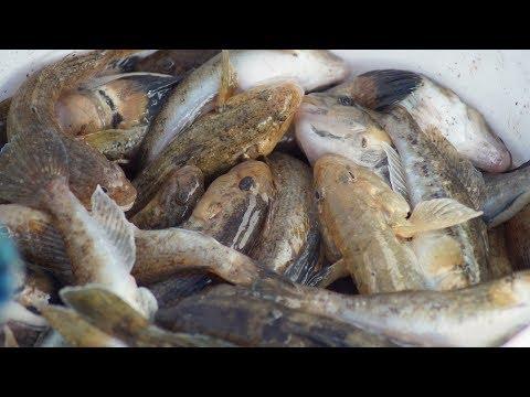 БЕЗУМНЫЕ ПОКЛЕВКИ АЗОВСКОГО БЫЧКА рыбалка на море с лодки 2018