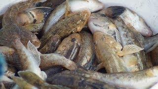 Fishing  Рыбалка на щуку ноябрь 2016 Ростовская область ерики Азовского моря ловля с берега
