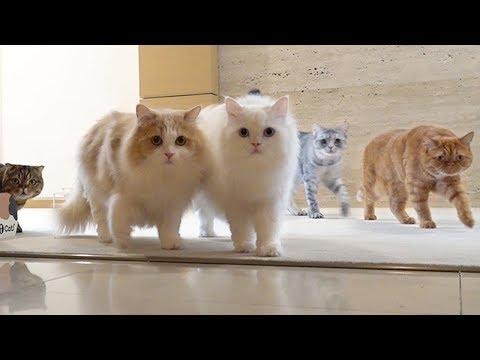 고양이 속이기 ㅋㅋㅋㅋㅋㅋ