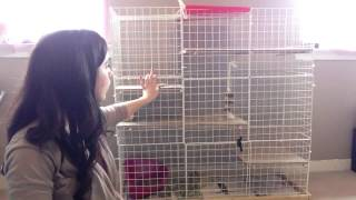 Make Your Own Rabbit Cage