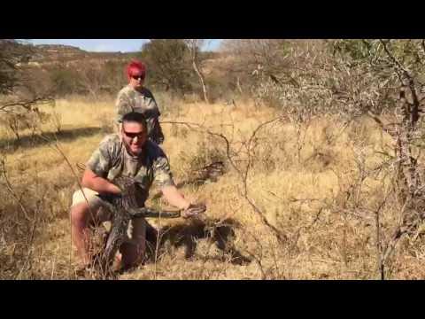 Huge African Rock Python found in Ladysmith