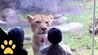 Kids At The Zoo: Compilation(In this funny animal video, tune in to see an awesome compilation of kids interacting with their favorite animals at the zoo. SUBSCRIBE TO PETSAMI: ..., 2014-02-25T18:22:56.000Z)