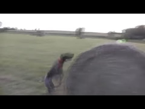 German Shorthaired Pointer – Jumping & Running in the field.