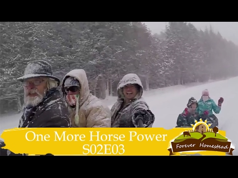 We Need One More Horse Power (Using a Belgian Horse To Get Our Trailer Out of the Snow)