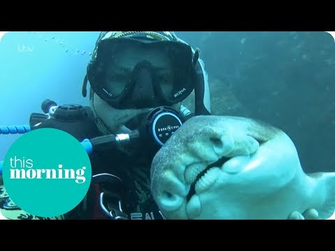I'm Best Friends With a Shark | This Morning