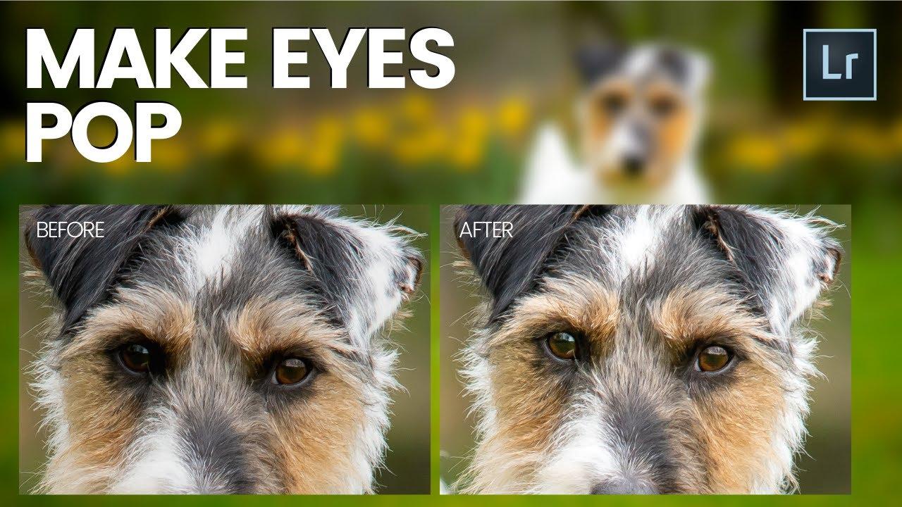 Download MAKE EYES POP in Lightroom - Episode 3 - Terrier Dog Photo Editing Series