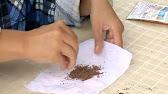 Голландский лук и чеснок. Технология озимой посадки. Компания .