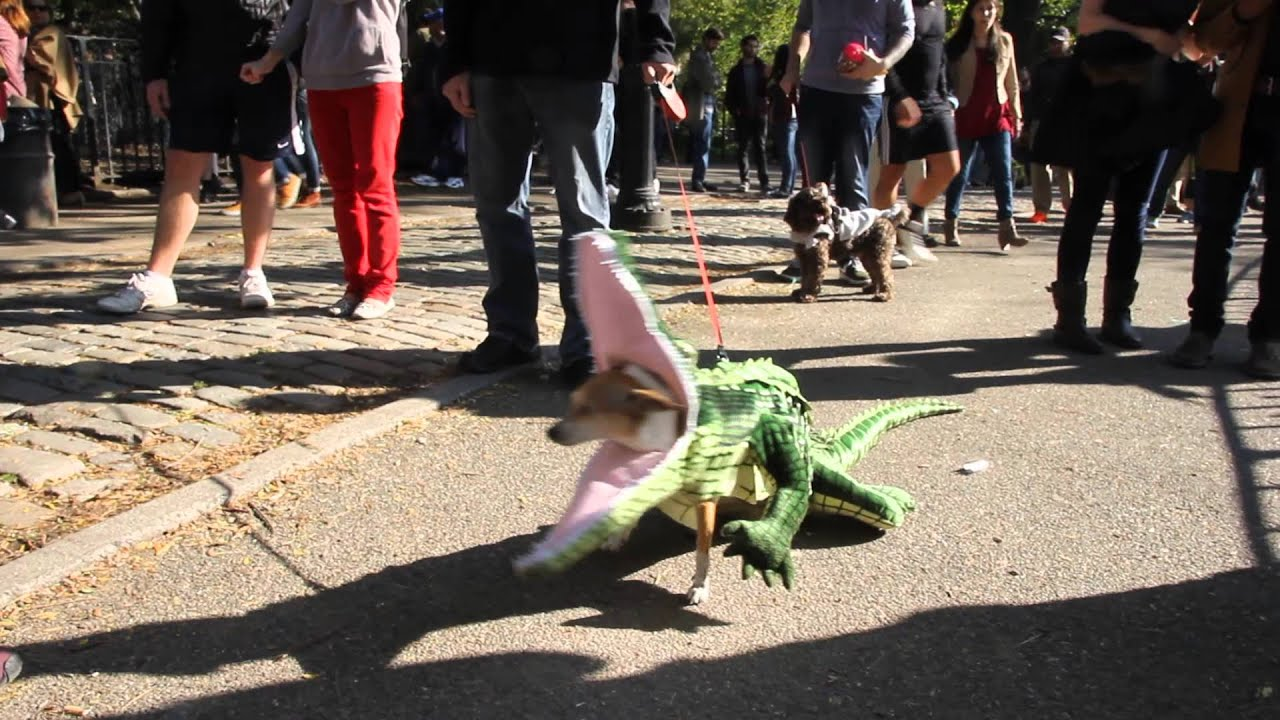 Alligator Dog at The Annual Halloween Dog Parade 2014 ...