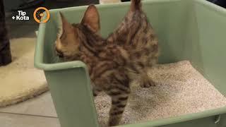 Gato Cuidados para tu gato 5