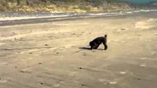 27 July 2012 Nickel, Et Al @ Carl Washburne State Park Beach, Oregon Coast