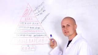 Основы правильного питания  И ПИЩЕВАРЕНИЯ