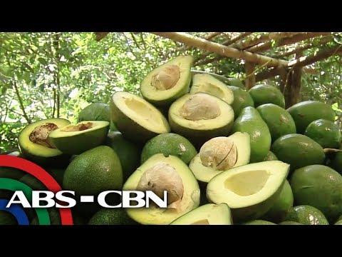 ALAMIN: Mga kakaibang recipe gamit ang avocado | Rated K