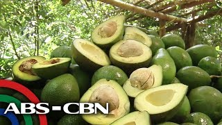 ALAMIN: Mga kakaibang recipe gamit ang avocado   Rated K