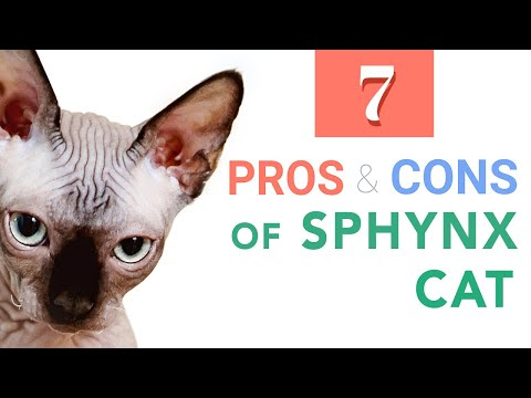 7 Pros & Cons Before Bringing a Sphynx Cat Home